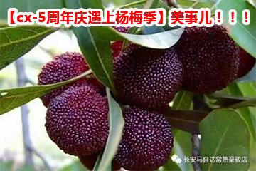 【cx-5周年庆遇上杨梅季】美事儿!!!